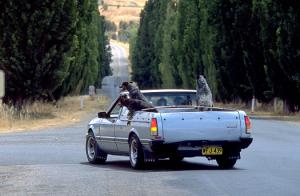 ピックアップトラックと犬